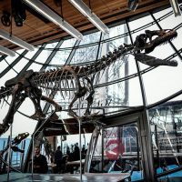 Esqueleto de dinossauro é vendido por mais de 8 milhões de reais na França